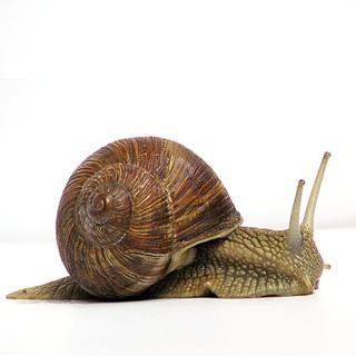 Elm house fun fact - snails have so many teeth